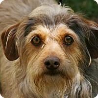 Adopt A Pet :: Andy - Tacoma, WA