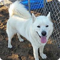 Adopt A Pet :: Brighton - Bonsall, CA