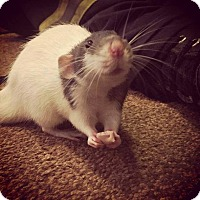 Adopt A Pet :: BUG - Philadelphia, PA