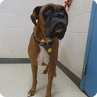 Adopt A Pet :: Charlie - Gulfport, MS