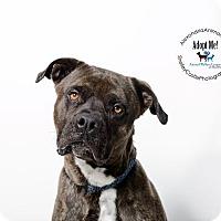 Adopt A Pet :: Hawkeye - Alexandria, VA