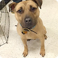 Adopt A Pet :: Gilligan in CT - Manchester, CT