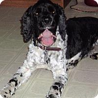 Adopt A Pet :: Vern - Sacramento, CA