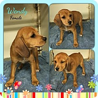 Adopt A Pet :: Wendy in Ct - Manchester, CT