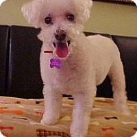 Adopt A Pet :: Coconut - 10 lbs - Dahlgren, VA