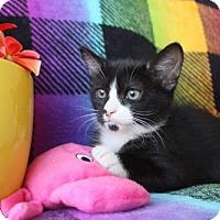 Adopt A Pet :: Newman - Phoenix, AZ