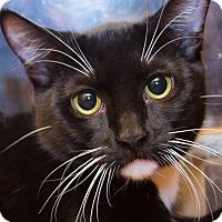 Adopt A Pet :: Spirit - Irvine, CA