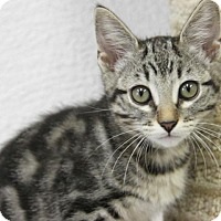 Adopt A Pet :: Rocky Road - Hawthorne, CA