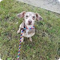Adopt A Pet :: Eminem - Plainfield, IL