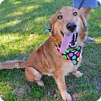 Adopt A Pet :: Layna - Lafayette, LA