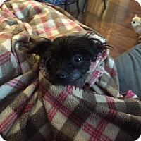 Adopt A Pet :: Breezy - Lebanon, TN