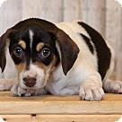 Adopt A Pet :: Jinky ADOPTION PENDING