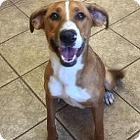 Adopt A Pet :: Carmen Vtg  5136 - Joplin, MO