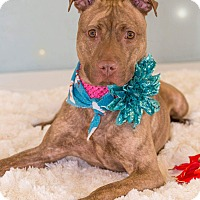 Adopt A Pet :: Tess - Flint, MI