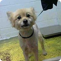 Adopt A Pet :: PRESTON - Atlanta, GA