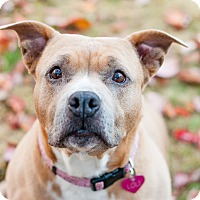 Adopt A Pet :: Loli (foster dog) - Portland, OR