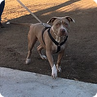 Adopt A Pet :: Karma - Orange County, CA
