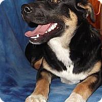 Adopt A Pet :: Skittles - Memphis, TN