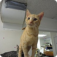 Adopt A Pet :: Sunny - MADISON, OH