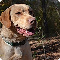 Adopt A Pet :: Leo - Cumming, GA