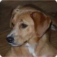 Adopt A Pet :: Monette - Newport, VT