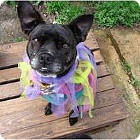 Adopt A Pet :: Bunny - Memphis, TN