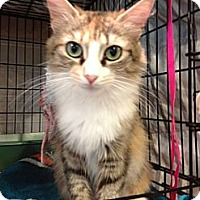 Adopt A Pet :: Abbey - Byron Center, MI