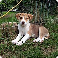Adopt A Pet :: Lady Gaga - Saskatoon, SK