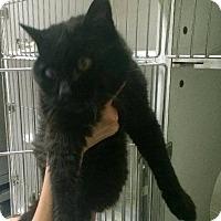 Adopt A Pet :: Winter - O'Fallon, MO
