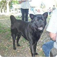 Adopt A Pet :: Jada - Marina del Rey, CA