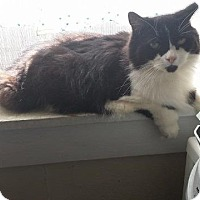 Adopt A Pet :: Cleo - Putnam, CT