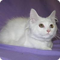 Adopt A Pet :: Lexus - Powell, OH