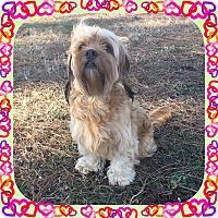 Adopt A Pet :: Daisy - Hampton, VA