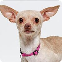 Adopt A Pet :: Flamenco - San Luis Obispo, CA