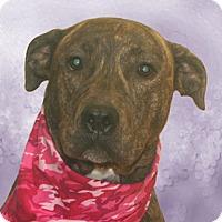 Adopt A Pet :: Sophia - Cincinnati, OH