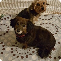 Adopt A Pet :: Bonded Pair: Jonnie and Joey (Have application) - Washington, DC
