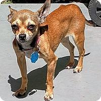 Adopt A Pet :: Iris - AUSTIN, TX