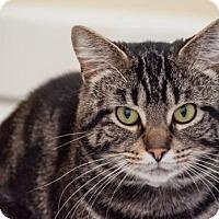 Adopt A Pet :: Donnely - Grand Ledge, MI
