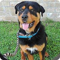 Rottweiler Mix Dog for adoption in Summerville, South Carolina - Victor (Buckshot)