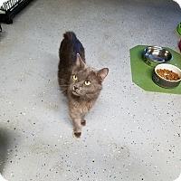 Adopt A Pet :: RUKA - Phoenix, AZ