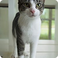 Adopt A Pet :: Sheldon - Prince George, VA