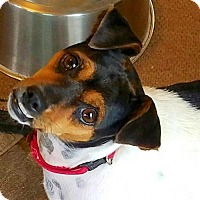 Adopt A Pet :: Precious (VA) - Virginia Beach, VA