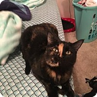 Adopt A Pet :: Cashmere - Wasilla, AK