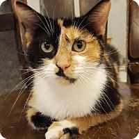 Adopt A Pet :: Jena - Grayslake, IL