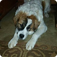 Adopt A Pet :: Zues - Rexford, NY