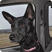 Adopt A Pet :: -Aries - Sedan, KS