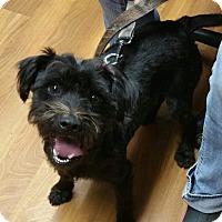 Adopt A Pet :: Bo - Lisbon, OH