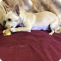 Adopt A Pet :: Sunny - Winters, CA