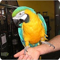 Macaw for adoption in Edgerton, Wisconsin - Kelly