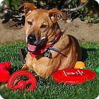 Adopt A Pet :: *URGENT* Alfie - Van Nuys, CA